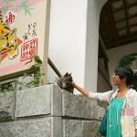 Enoshima Cat
